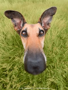 Why the long face? - A bubble head picture of my Noodles ... now that sounds…