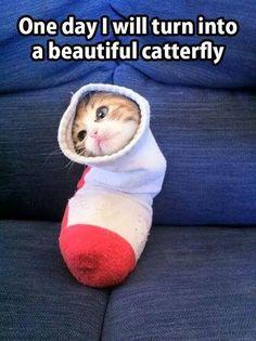 funny kitten in a sock