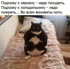 Have no clue what the caption says, but that fat cat is hilarious the way it's sitting :D