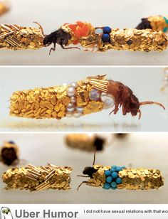 beautiful - these are water beetles whose shells get enameled with rocks and wood....don't know where this came from, but someone created art by letting them live in an environment of gold and beads. absolutely gorgeous!!