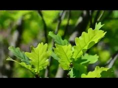 Herbs, Youtube, Herb, Youtubers, Youtube Movies, Medicinal Plants