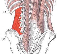 Learn how solving your own back pain relates to understanding the Thoracolumbar Fascia.