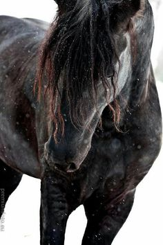 25 beautiful black horse pictures - meowlogy Source by All The Pretty Horses, Beautiful Horses, Animals Beautiful, Hello Beautiful, Absolutely Gorgeous, Black Horses, Wild Horses, Dark Horse, Regard Animal