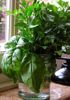 Fresh herbs in jar for easy use, stays fresh for weeks! They'll also form roots and you can then plant them if you like!