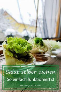 Du fragst dich: Kann man Salat nachwachsen lassen? Ich sage ja! So einfach kannst du aus einem Strunk eine neuen Salatpflanze ziehen! Ethnic Recipes, Food, Grow Lettuce, Compost, Simple, Gifts, Essen, Meals, Eten