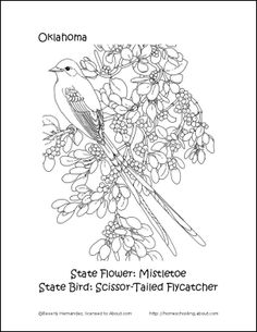Oklahoma State Bird And Flower - Coloring Home |Oklahoma State Bird Fower