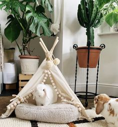 Bunny Cages, Rabbit Cages, House Rabbit, All About Rabbits, Pig Habitat, Pet Bunny Rabbits, Bunny Room, Pet Organization, Barbie Dream House