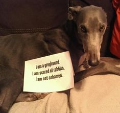 Don't tell the other greyhounds