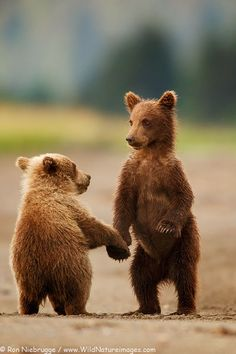 Bear Cub Pictures
