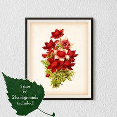 Illustration download Flower wall art by RestoredBotanicalArt