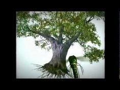 As Árvores (Documentário Especial) Tudo que precisamos saber sobre esses curiosos seres tão fantásticos.