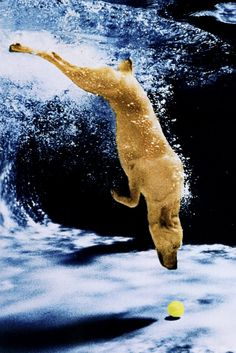 The original diving dog from 1997