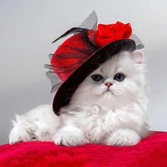 Cute Cats And Kittens, Baby Cats, Kittens Cutest, I Love Cats, Pretty Cats, Beautiful Cats, Cat Hat, Tier Fotos, Cross Paintings