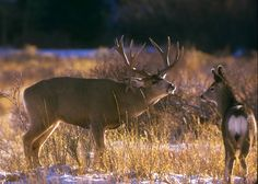 Old-Timer Bucks | California Outdoors Q and A