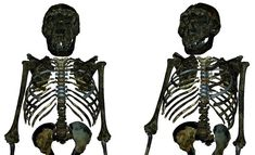 Biological Anthropology, Early Humans, Human Evolution, Archaeology News, History Museum, Natural History, Fossils, Body Shapes, Three Dimensional
