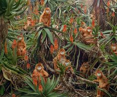 Picture of a constructed image of red monkeys sitting in a forest amongst orange flowers