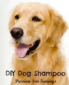 Learn how to make homemade dog shamoo using just a few ingredients you probably already have around the house.
