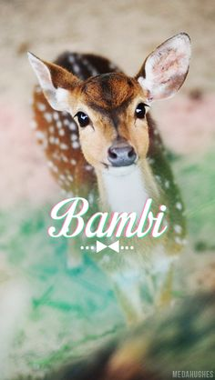 Pastel (real life) Bambi <3