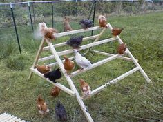 Chicken Coop - This is a gem of an idea. How to build a simple jungle-gym for your chickens Building a chicken coop does not have to be tricky nor does it have to set you back a ton of scratch. Types Of Chickens, Keeping Chickens, Pet Chickens, Raising Chickens, Urban Chickens, Diy Toys For Chickens, Raising Goats, Chicken Life, Chicken Runs