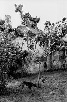 Frank Horvat - The '80s   // 1981, Sicily, Bagheria, Villa Palagonia