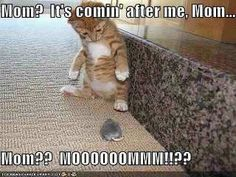 Mom! ~~ This reminds me of *my* cat! LOL