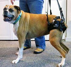 Best Dog Mobility Sling For Large Breeds