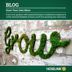 Grow Your Own Moss If you love gardens filled with mismatched pots, weathered sculptures and richly textured blankets of moss, then you will love growing your own moss.