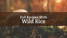 These fall wild rice recipes are perfect to cook up in your kitchen and then cuddle on the couch to enjoy.
