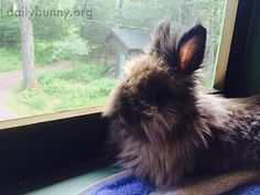 Bunny sits on the windowsill and contemplates the outdoors - August 18, 2014 - More photos at the link: http://dailybunny.org/2014/08/18/bunny-sits-on-the-windowsill-and-contemplates-the-outdoors/ !