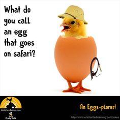 What do you call an egg that goes on safari? An Eggs-plorer! Farm Jokes, Funny Jokes And Riddles, Cute Jokes, Funny Jokes For Kids, Corny Jokes, Funny Puns, Kid Jokes, Hilarious, Funny Work Jokes