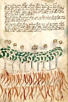 A page from the Voynich manuscript Voynich Manuscript, Texts, Coding, History, Historia, Texting, Programming, Text Messages