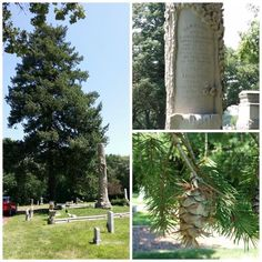 arbor day memorial trees