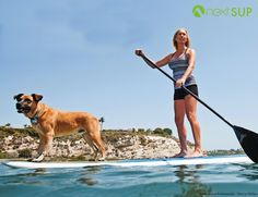 I wonder how long it took to train this puppy to SUP (owner in next swimwear)