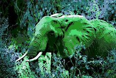 an African Elephant takes a run in the Jungle.