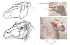 "drawings of camels | Concept Design Academy: ""Animal Anatomy"" with Jonathan Kuo~!!"