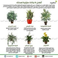 Flowering House Plants, House Plants Decor, Plant Decor, Side Garden, Veg Garden, Tiny Garden Ideas, Flowers Last Longer, Backyard Garden Design, Flower Planters