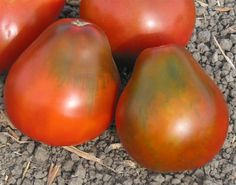 Black Pear-Heirloom Tomato Seeds