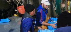 Schlechte Fangquoten für die Gamba aus Sòller