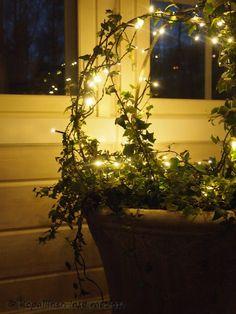 Kopallinen inspiraatiota: Muratit: Kesäkukkien jatkoaika. Lights, winter, chistmas, lighting, indoor Lights, Plants, Ideas, Hi Lights, Lighting, Flora, Planters, Thoughts, Lamps