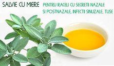 Salvie cu miere pentru raceala cu secretii nazale si post-nazale, infectii   LaTAIFAS Cantaloupe, Weed, Cancer, Fruit, The Fruit