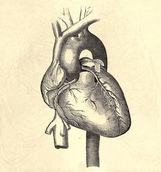 """Sending my """"love!"""" Image from Practical Medical Anatomy from U Toronto on the Internet Archive."""