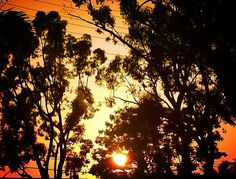 Summer dusk sun through the trees. #sunset #sun #dusk #summer #trees #sillouette #colorfulsky #findbeautywherryouare #beautiful #travelspiritually #amazingsky #thankyoujesus #praisegod #praisegodalways #travellocal #orangeca #orangecalifornia #california #ca #outplanettravel