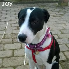 Hello everyone!! Have a great week!! 🐾🐾🐶 Follow JOY at her Facebook page for many more photos and videos:  https://www.facebook.com/JOYMixedBreedGirl/  #dog #instagramdogs #ilovemydog #instapuppy #dogfamily #doggie #ilovemypet #dogofinstagram #happydog #dogface #dogsofig #dogselfie #doglovers #dogsofinstaworld #petstagram #doglover  #petlover #instadog #dailypawwoof #happydog_feature #dogsubmit