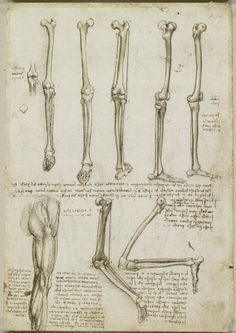 Recto: The bones and muscles of the leg. Verso: The muscles of the shoulder, arm and neck | Royal Collection Trust