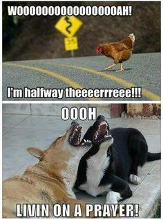 https://www.facebook.com/pages/My-Mind-Wandered-and-Didnt-Come-Back/327336357378376?ref=hl humor, funny, pun, dog, chicken, animal, lyrics