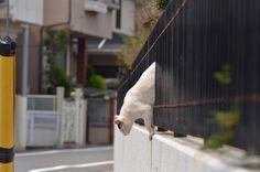 cats_2013-05-26_3 by yousukezan, via Flickr
