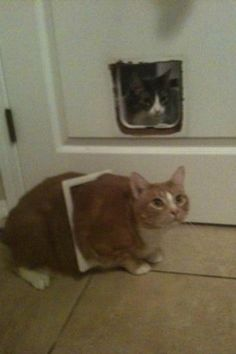 21-cats-who-definitely-regret-their-decisions_16.jpg