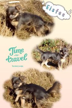 Perfect Image, Time Travel, Chihuahua, Ice, Movies, Movie Posters, Films, Film Poster, Cinema