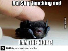 I am the night!