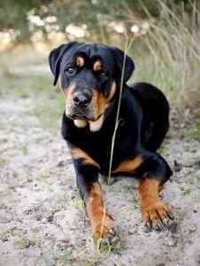Shih tzu dog personnalisé anniversaire papier cadeau ajouter nom//s choisir background